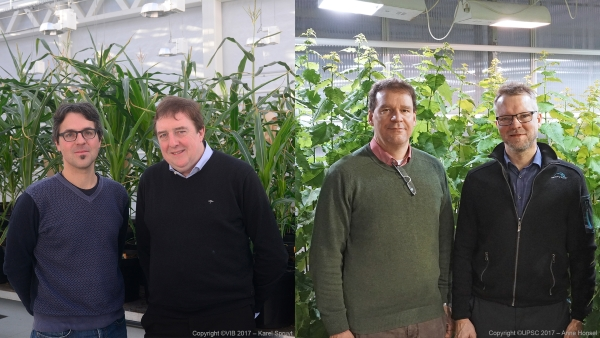 Left: Klaas Vandepoele and Dirk Inzé from VIB Center for Plant Systems Biology (© VIB 2017 / Karel Spruyt); Right: Ove Nilsson from UPSC and Carl-Gustav Löf from SweTree Technologies (© VIB 2017 UPSC / Anne Honsel)